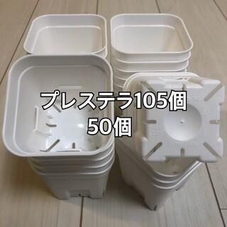プレステラ105 白 50個(プランター)