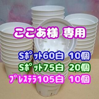 【スリット鉢】Sポット丸型75白20個 2.5号 他プレステラ 多肉植物 プラ鉢(プランター)
