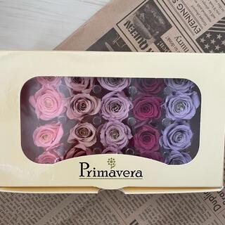ハーバリウム 花材 プリザーブド 薔薇 べべ