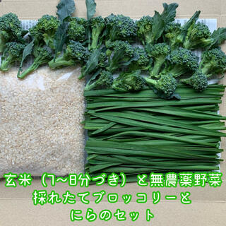 玄米(7〜8分づき)と無農薬野菜*採れたてブロッコリーとにらのセット*ネコポス(野菜)