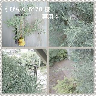 《 ぴんく5170 様  専用 》 ¥300(その他)