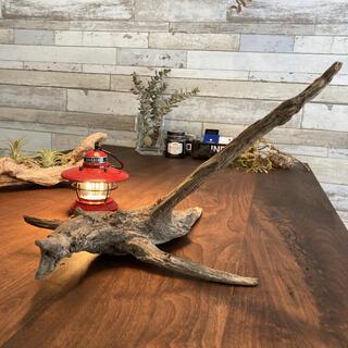 魚の様な流木…天然物、オブジェ。置物、インテリア14(彫刻/オブジェ)