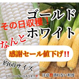 セール送料無料農家直送ホワイトゴールド約60サイズ入るだけ(野菜)