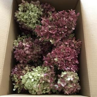 水無月 ミナヅキ ヘッド 小房 ドライフラワー 72サイズ箱 花材 リース (ドライフラワー)
