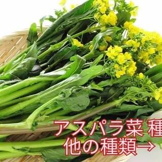 野菜種☆アスパラ菜☆変更→人参 空芯菜 チンゲン菜 スイスチャード わさび菜(野菜)