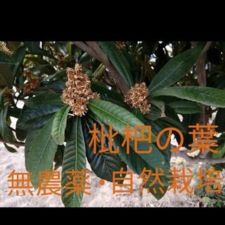 枇杷の葉(健康茶)