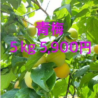 自然農法 青梅5kg ❤︎梅ジュース 梅酒 簡単に作れます❤︎(フルーツ)