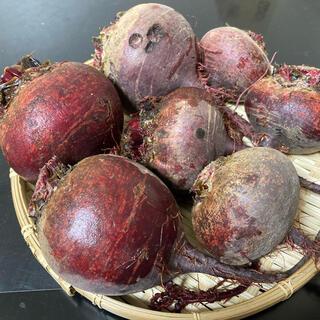 広島県産ビーツ(1kg)(野菜)