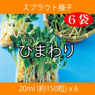 スプラウト種子 S-05 ひまわり 20ml 約150粒 x 6袋(野菜)