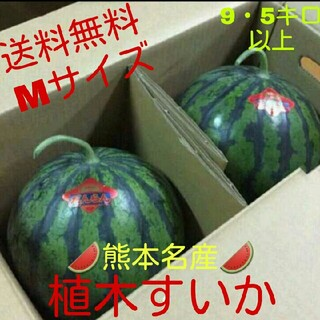 熊本すいか秀品2玉セット☆Mサイズ☆9・5キロ以上