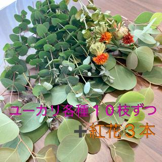 ユーカリポポラス・ユーカリグ二ー・紅花のセット