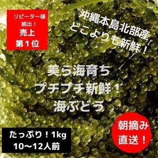 朝摘み直送!プチプチ美味しい!沖縄産海ぶどうタップリ!1kg(野菜)