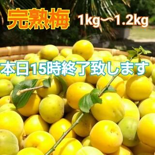 【完全農薬不使用♪庭の梅】完熟梅  約1kg〜1.2kg☆今だけ赤じそおまけ♪