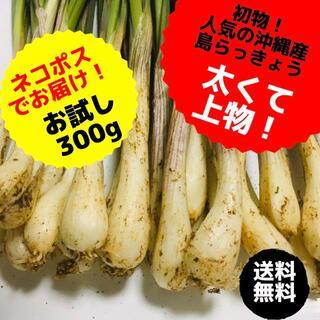 沖縄本島北部産 シーズン最終!島らっきょう 300g(野菜)