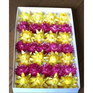 ① 銀の紫陽花が作った濃いピンクとレモン色の貝細工のドライフラワー(ドライフラワー)