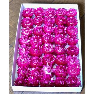 銀の紫陽花が作った濃いピンクの貝細工のドライフラワー(ドライフラワー)