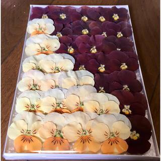 f④  銀の紫陽花が作った大人色ビオラのドライフラワー(ドライフラワー)