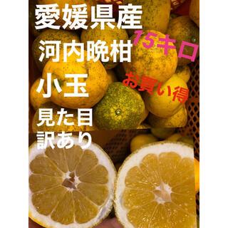 愛媛県産 訳あり河内晩柑小玉15キロ(フルーツ)
