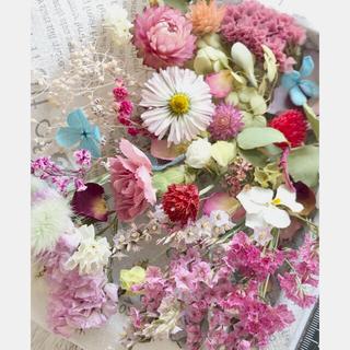ドライフラワー花材セットNo.188⁑ピンク❇︎赤❇︎グラデーション(ドライフラワー)