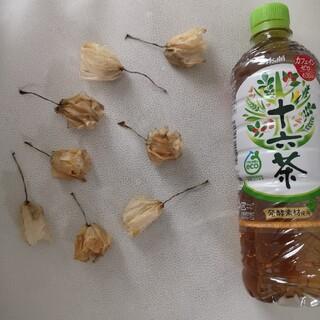ドライフラワー 胡蝶蘭 8個(ドライフラワー)