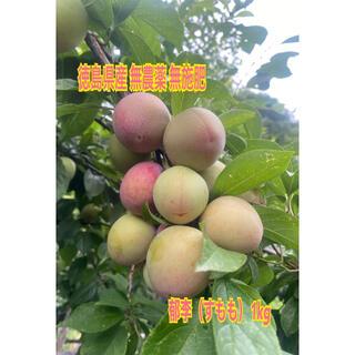 徳島県産 無農薬  無肥料 郁李(すもも)1kg(フルーツ)
