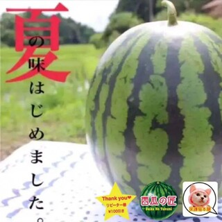 大人気☆西瓜の匠厳選鳥取ブランド西瓜(特大1玉入り)(フルーツ)