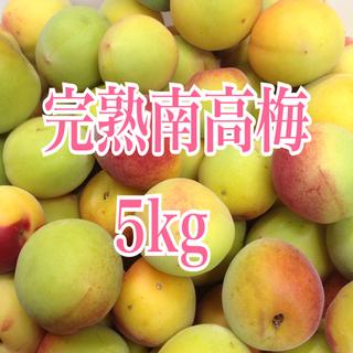 南高梅 5kg