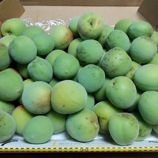 岐阜県産の、南高梅になります。1.5キロです。(野菜)