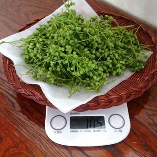 若摘み山椒の実100グラム(野菜)