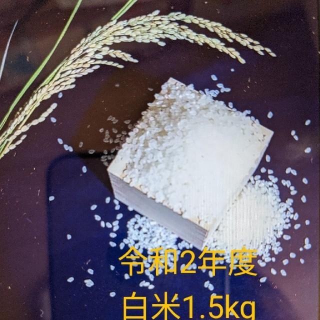 【令和2年度 白米1.5kg】農家のコシヒカリ 食品/飲料/酒の食品(米/穀物)の商品写真