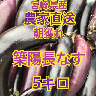 なす 5キロ 宮崎県産(野菜)
