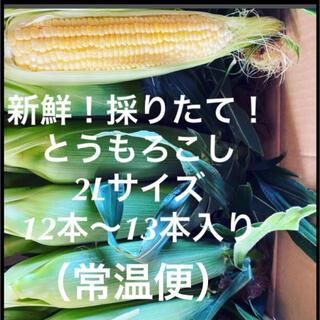 千葉県産 とうもろこし 13本(野菜)