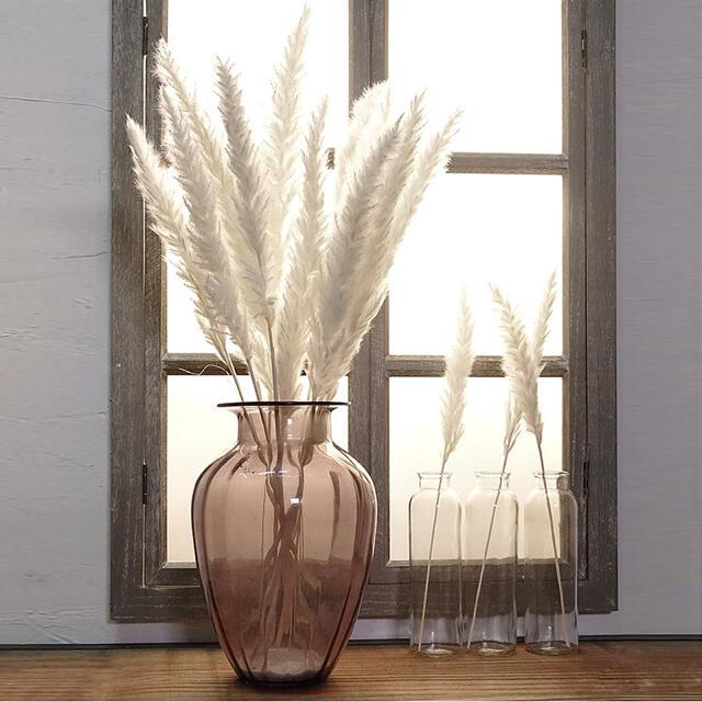 パンパスグラス ドライフラワー ウェルカムスペース ホワイトパンパスグラス15本 ハンドメイドのフラワー/ガーデン(ドライフラワー)の商品写真