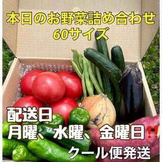 【産地直送‼️採れたて野菜をお届け❗️】