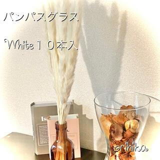 【大人気】パンパスグラス ホワイト10本入り 送料込み ドライフラワー