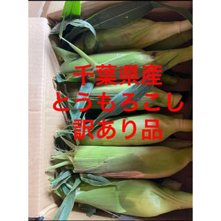 千葉県産 訳ありとうもろこし 10本(野菜)