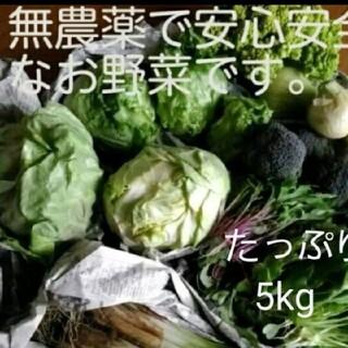 たっぷり5kg以上 無農薬野菜