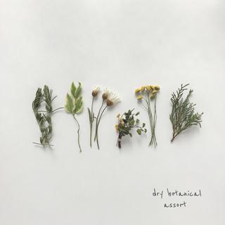 dry botanical /  ドライフラワー 花材  ミモザ  ハンドメイド(ドライフラワー)
