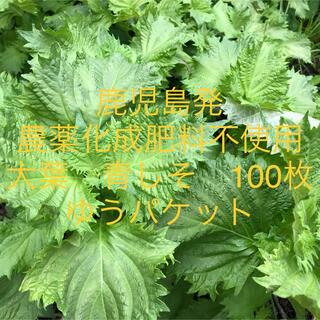 鹿児島産 農薬化成肥料不使用 大葉 青しそ 100枚