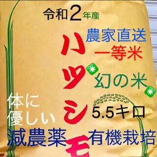 令和2年産✳️減農薬、有機肥料 特別栽培米 色彩選別済1等米ハツシモ 5.5キロ