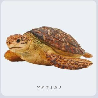 ウミガメ 新江ノ島水族館 はしもとみお ガチャ(その他)