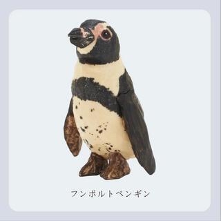 ペンギン 新江ノ島水族館 はしもとみお ガチャ(その他)