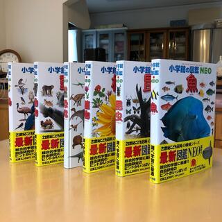 ショウガクカン(小学館)の小学館の図鑑NEO 6点セット(魚、鳥、昆虫、植物、動物、恐竜)(絵本/児童書)