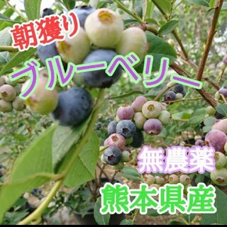 増量中。生ブルーベリー300g 熊本県産(フルーツ)