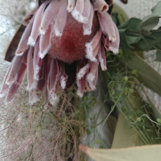 バンクシアとプロテア~スモークツリーのスワッグ ハンドメイドのフラワー/ガーデン(ドライフラワー)の商品写真