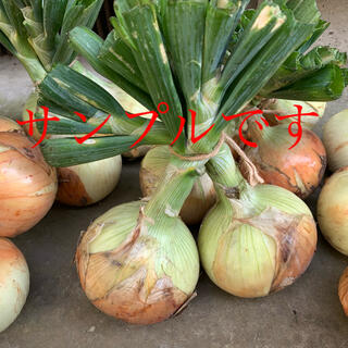 農家から直接販売、新玉ねぎ10キロです(野菜)