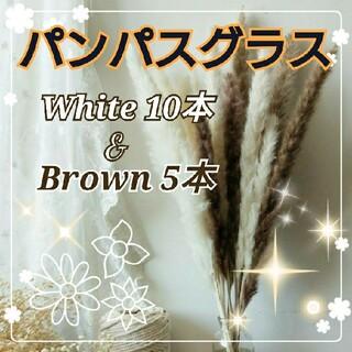 パンパスグラス ☆ドライフラワー おしゃれインテリア 15本 ホワイト☆ブラウン(ドライフラワー)