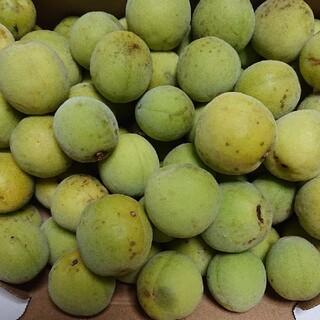 ✨無農薬の梅✨       1.3kg(フルーツ)
