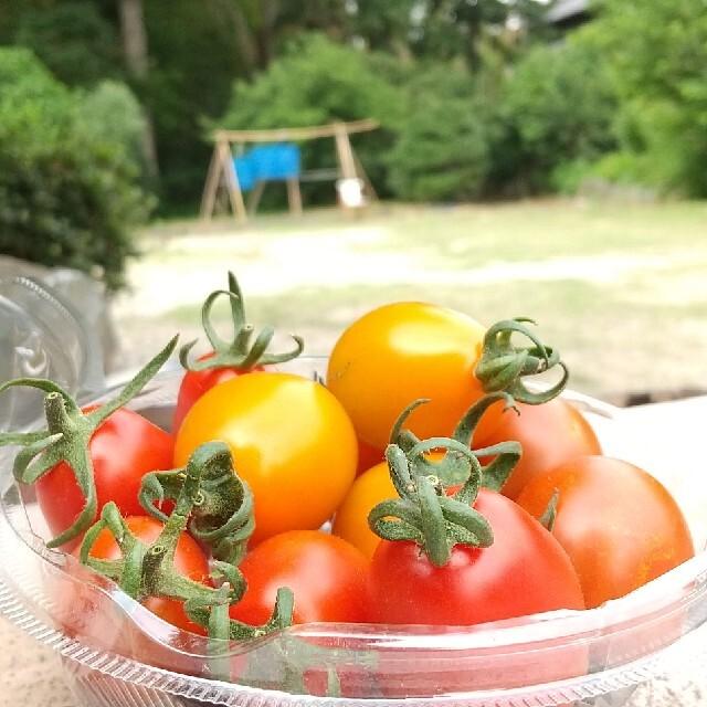 新鮮野菜【畑〜直送便80sizeでお届け致します】農薬不使用 食品/飲料/酒の食品(野菜)の商品写真