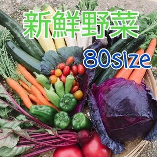新鮮野菜【畑〜直送便80sizeでお届け致します】農薬不使用(野菜)